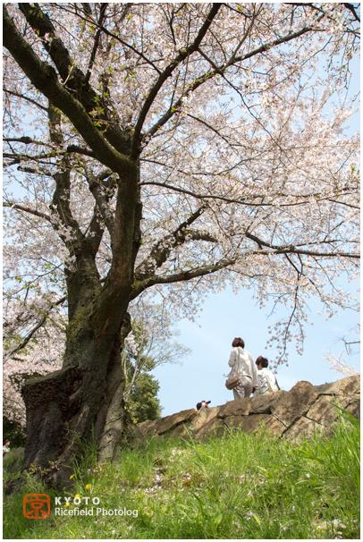 インクライン 京都